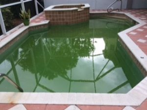 Palm Beach Swimming Pool Service - Green-to-Clean - CCA BEFORE